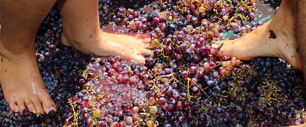 Mercat bio Xaló - Grape tread in a traditional way.